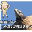 五島列島福江島でハチクマの渡りが確認されてから30年。節目の年を記念し開催する「ハチクマ写真・ポスター展」の出展写真を募集します。