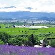北海道ゆるっと鉄道旅~富良野線2:駅から歩いて行ける彩り鮮やかな花畑巡り