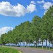 北海道ゆるっと鉄道旅~富良野線4:丘のある風景を眺めに美瑛へ