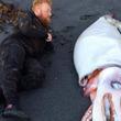 【伝説の怪物か!?】ニュージーランドの海岸に4メートルもの巨大イカが漂着!