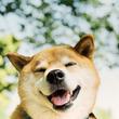 【ロフト】渋谷ロフト 柴犬まるのSPECIAL FAIR