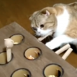 なかなか叩けない…。モグラ叩きゲームをする猫がじわじわ来る可愛さ。