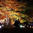 20種類500本のカエデライトアップ「紅葉見ナイト」開催! 国営武蔵丘陵森林公園