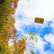【苗場スキー場・かぐらスキー場】季節の移ろいを感じる秋色空中散歩
