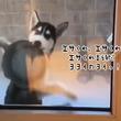 犬がエサを欲しいときにお皿くわえて踊る「エサくれ音頭」