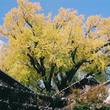 【佐賀県有田町】「秋の有田を彩る紅葉」と「秋の有田のまちあるき」
