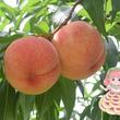果物の魅力に迫る!第73回企画展「くだもの展 ギュッと濃縮!果物の魅力」開催中
