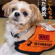飼い主から見放されたシーズー犬が「聴導犬」になった! 児童向けノンフィクション『聴導犬こんちゃんがくれた勇気』10/16発売!