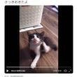 子猫が首を「ポリポリ」しながら転がる動画ツイートに反響「こてん!となった瞬間が可愛すぎ」