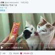 まさに「リア獣」 猫同士のいちゃつく動画がほほえましくも羨ましい