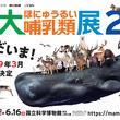 『大哺乳類展2』が上野・国立科学博物館で開催 400点以上の剥製や骨格標本から、哺乳類の生存戦略に迫る
