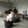 スター猫のお宅訪問![1]インスタ・ブログで人気の「どんこ」と写真家・井上佐由紀さん、外山輝信さんの暮らし