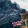 なぜこんな高所に猫が!?標高2500メートルの山の山頂でイエネコが優雅にくつろいでいた件(ポーランド)