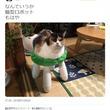 猫が椅子に座った結果「猫型ロボット」に! 「自動で回転しながら動きそう」「ロボねこ」コメント集まる