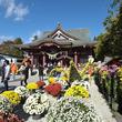 日本最古の菊まつり!「第111回 笠間の菊まつり」開催中