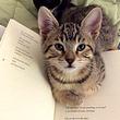こんなモノよりアタシを愛でて!文字の書いてあるものは絶対に読ませたくない猫