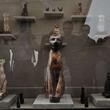 古代エジプトの墓で大量の猫のミイラを発見
