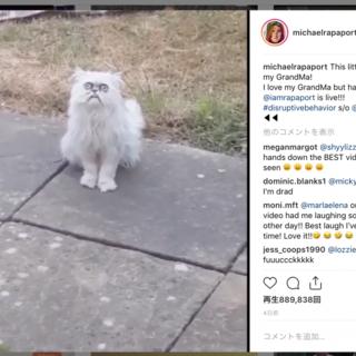 「(⊙A⊙)」こんな顔の猫