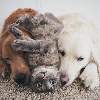 犬+猫+犬=「幸せ物質」