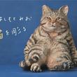 ───猫ですか? いいえ、彫刻です。───『はしもとみお 猫を彫る』どうぶつ彫刻家はしもとみおの猫彫刻集が11月24日発売! 定価1620円(本体1500円)