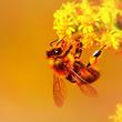 ミツバチが持つ善良な特性 仲間の災難に取った行動とは