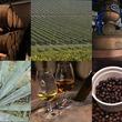 【新カテゴリー発表!】東京ウイスキー&スピリッツコンペティション、エントリーカテゴリー増加のお知らせ