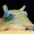 """『ゾクゾク深海生物2019』サンシャイン水族館スタッフが採集した深海生物を展示。生物にタッチできる「ゾクゾクタッチ」&初開催「ヌタッチ」など、深海に棲む生き物を""""観て触れて味わえる""""冬限定のイベント!"""