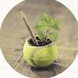 デンマークで花や野菜が生える「鉛筆」が大人気! 世界は環境優先のモノづくりへ=浜田和幸