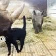 黒猫のコミュ力の高さ!サイの親子にスリスリすり寄り友好条約?