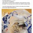 麻薬入りの袋を拾って枕にしていた猫に飼い主ビックリ 警察もスカウト