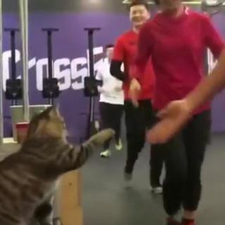 ジムにいる猫 全員にハイタッチ