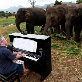 ピアノで傷ついたゾウ癒やす
