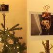 クリスマスツリーのてっぺんに飾ったのは「愛犬」の写真