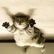 床に寝転んでいる猫の写真を逆さまにした時の無重力感がすごい!