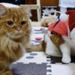 """""""猫界のクリスマスパーティー""""に参加してみた!? サンタやトナカイのコスチュームに身を包んだ「聖なる癒し猫」たちをお届け!"""