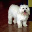 イギリス版人気「白犬」フォロワー数が人間様を遥かに超える数に!