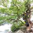 2019年初詣に行こう!肥前国の歴史を見つめ続ける御神木「與止日女神社」