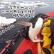 抜き打ちチェックな!海の中から突如現れたペンギン、ボート内の安全点検を実施中