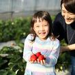1月15日は「いちご王国・栃木の日」。 今年もいちご狩りのシーズン到来!! 半世紀にわたり生産量日本一の栃木県「いちご王国」へ