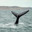 池田教授が一刀両断。いまさら国際捕鯨委員会を脱退する日本の愚
