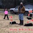 さすが犬界ナンバーワンの頭脳派。ボーダーコリー3匹が絶妙なフォーメーションで鳥を目的の場所に移動させる