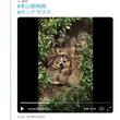 東山動物園のタヌキが団子のように集まる動画が話題に「こんな掛布団が欲しい」「モフモフモフモフモフモフモフモフ」