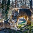 動物界で一夫一婦制を定める普遍的コードが発見される(米研究)