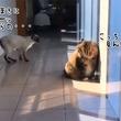 猫が猫に近づいてきた。徐々にその距離を縮めていくと、まさかの行動に!!