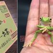 お茶のダンボールで作ったカエルが超かわいい!作者は会社員「自分の『好き』を信じる」