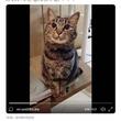 猫が「なでなで」をおねだりする動画が話題に「おすまししながら甘えんぼ」「最後の2秒で完全にやられました」