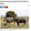 国立公園で送電鉄塔が倒れ、野生動物6頭が感電死(南ア)