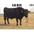 世界最高齢の雄のクローン牛「第2隼人」が死亡、20歳4カ月/農研機構