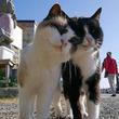 ハッピーバレンタイン!猫たちのイチャコラ画像で愛を育てよう