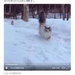 雪の中を散歩する猫たちの様子が話題に「しっぽがゴージャス」「モフモフ感がふんもっふ!」